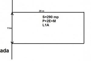 Teiul Doamnei, 290 mp,D=11,P+2+M